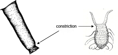 Constriction