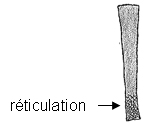 Réticulation