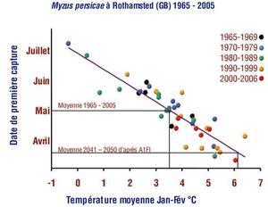 Phénologie de Myzus persicae