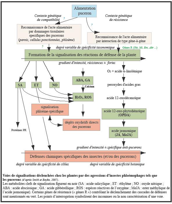 Réponses des plantes à la présence de bio-agresseurs