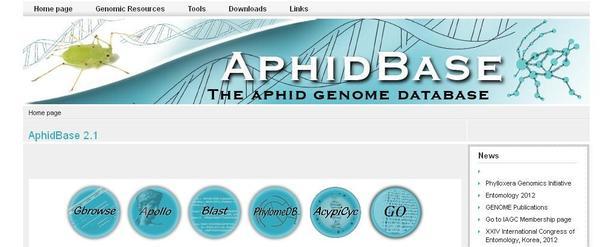 Aphidbase : génome du puceron du pois