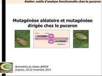 Mutagénèse aléatoire et mutagénèse dirigée chez le puceron
