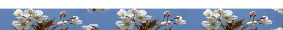 fleurs d'arbre fruitier