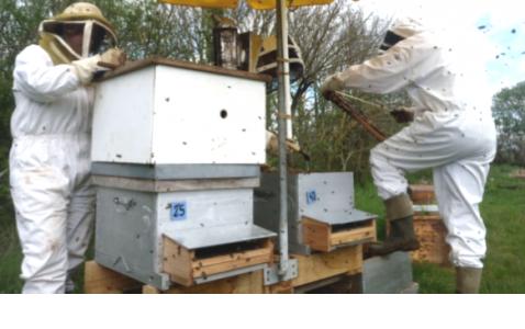Apiculteurs s'occupant de ruches