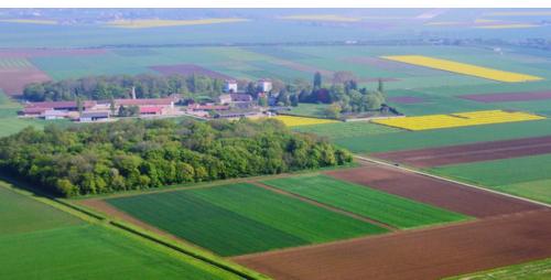 Vue aérienne de champs cultivés
