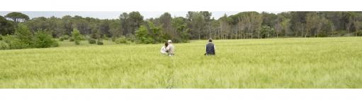 Personnes au travail dans champ de céréales