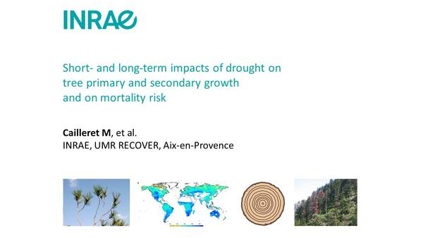 Cailleret_drought-impacts-growth-mortality