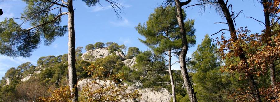 IMG_0205a forêt méditerranéenne2