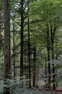 Font-Blanche : une véritable forêt provençale