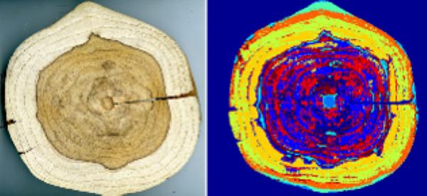 Imagerie hyperspectrale (HSI) appliquée au bois rondelle de teck