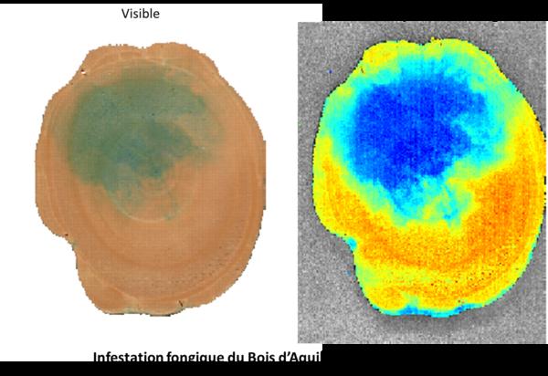 Imagerie hyperspectrale (HSI) appliquée au bois