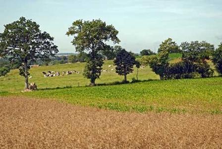 Polyculture-élévage dans le bocage normand