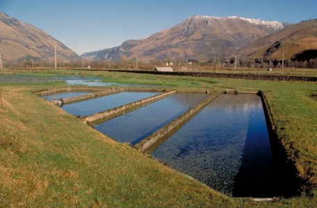 bassin d'élevage