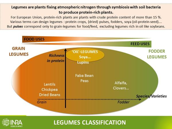 Legumes definition INRA English[1]