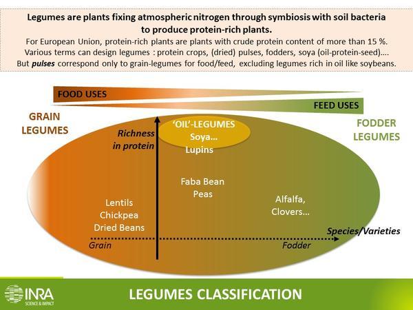Legumes definition INRA English[1]