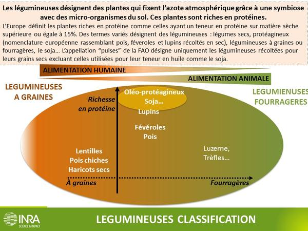 Légumineuses definition INRA
