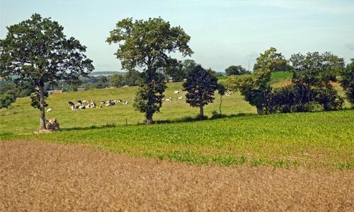 Diversité des agricultures