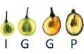 Logo of the IGGP consortium