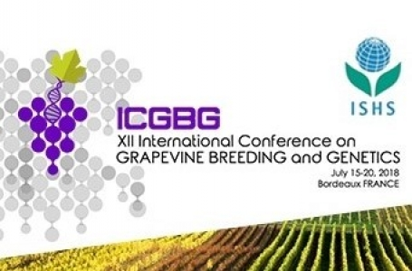 Logo of the GBG2018 conference