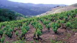 Vignoble de Banyuls, Pyrénées-Orientales. Christophe Maitre