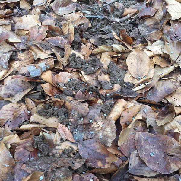 Réseau MOS: Cendres granulées, site de Darney (© Laurent Saint-André, INRA)