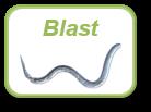 Image_blast