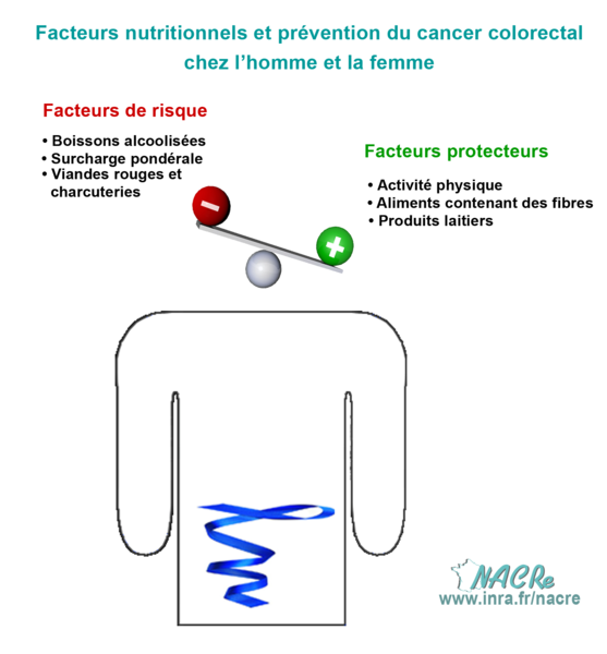 Facteurs nutritionnel Cancer colorectal dépistage 2016
