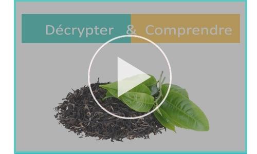 decrypter comprendre the vert cancer