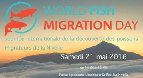L'INRA (UMR Ecobiop) participe au World Fish Migration Day 2016 sur la Nivelle