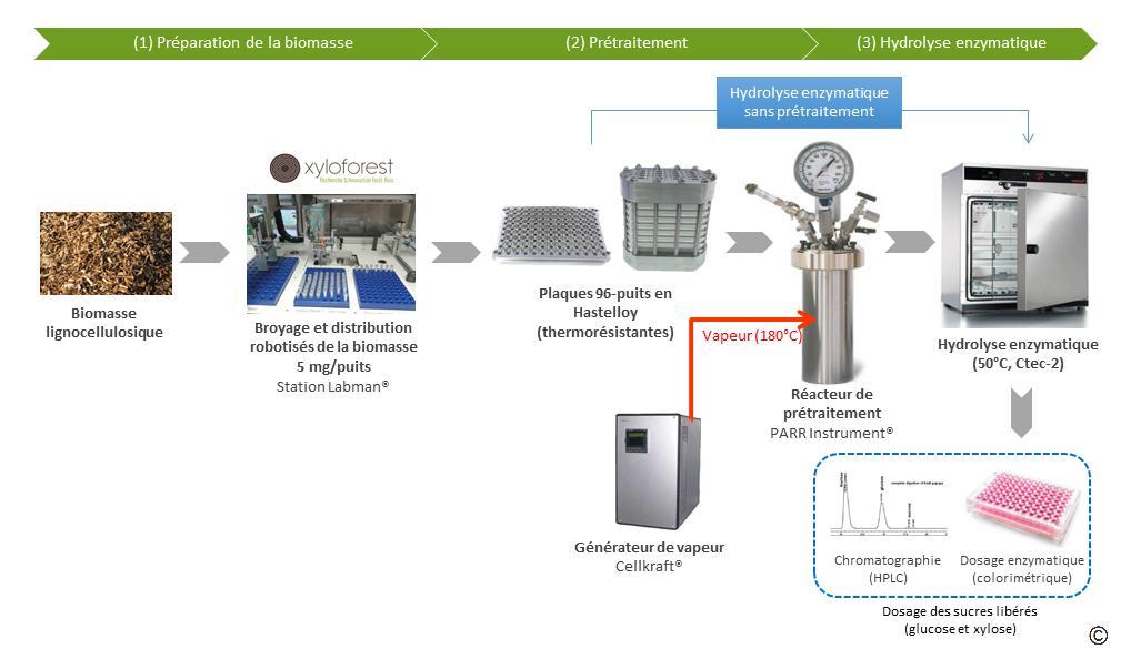 Process saccharification
