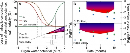 Art2-Physiological thresholds for drought-induced mortality in stems and leaves versus long-term drought survey in Napa Valley and Saint-Emilion.