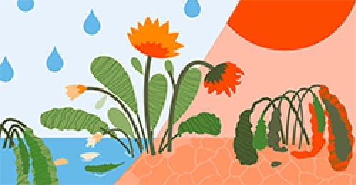 Le dérèglement climatique : un défi pour les plantes
