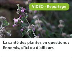 La santé des plantes en questions : Ennemis, d'ici ou d'ailleurs