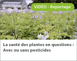 La santé des plantes en questions : Avec ou sans pesticides