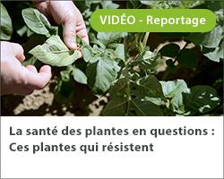 La santé des plantes en questions : Ces plantes qui résistent