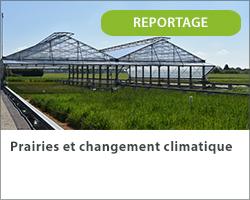 Prairies et changement climatique