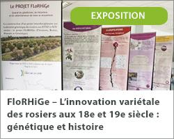 Exposition FloRHiGe – L'innovation variétale des rosiers aux 18e et 19e siècle : génétique et histoire