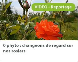 0 phyto : changeons de regard sur nos rosiers