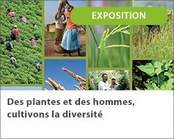 Des plantes et des hommes, cultivons la diversité