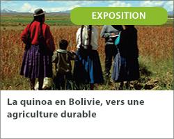 La quinoa en Bolivie, vers une agriculture durable