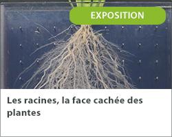 Les racines, la face cachée des plantes