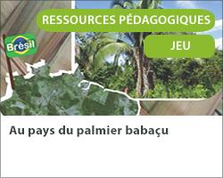 Au pays du palmier babaçu