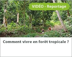 Comment vivre en forêt tropicale ?