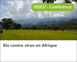 Riz contre virus en Afrique