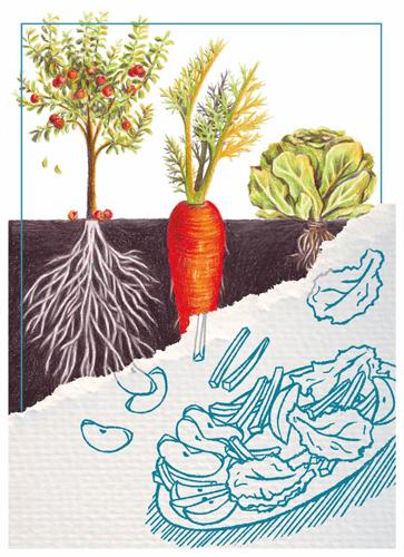 Que mange-t-on dans une plante ?