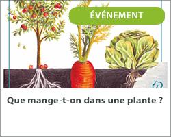 Que mange t-on dans une plante ?