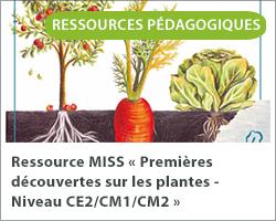 Ressource MISS « Premières découvertes sur les plantes - Niveau CE2/CM1/CM2 »