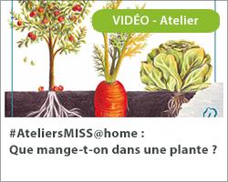 """#AteliersMISS@home """"Que mange t-on dans une plante ?"""""""