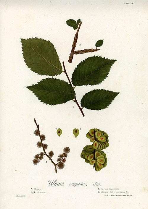 Estampes de botanique