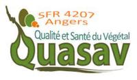 SFR Qasav